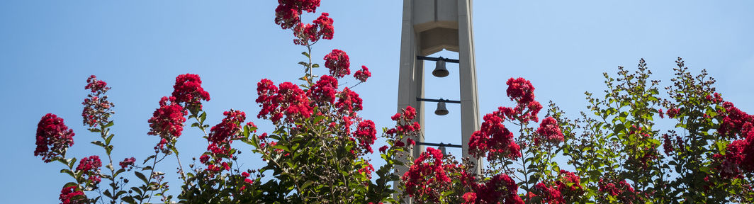Red flowers at the base of Temple's iconic Bell Tower.