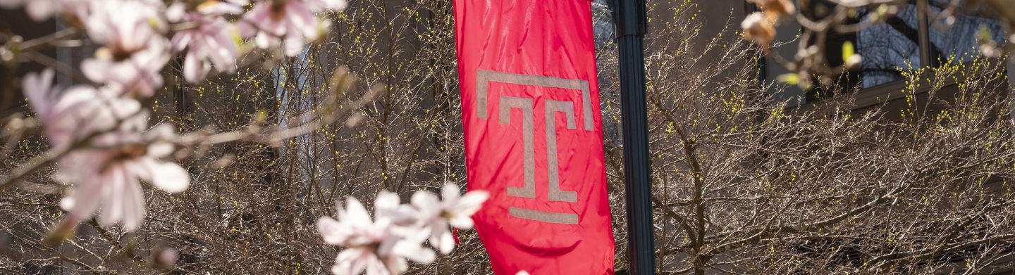 """A tree blossoms with pink flowers in front of a Temple """"T"""" flag."""